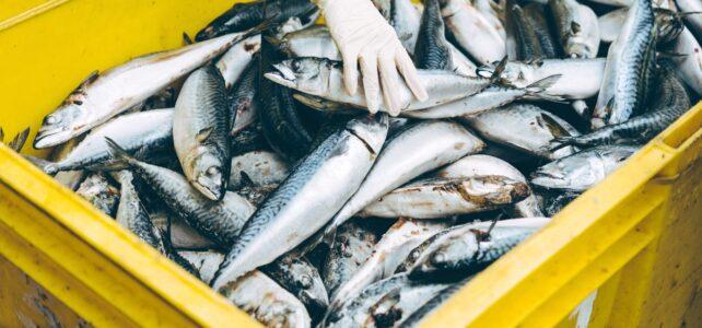 solicitar empleo descarga de pescado vigo puerto